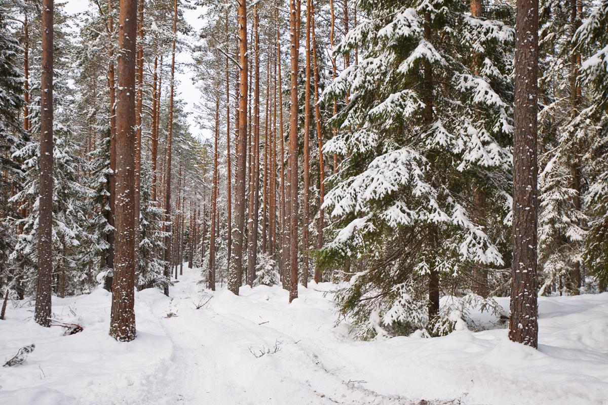 metsatööde_korraldamine